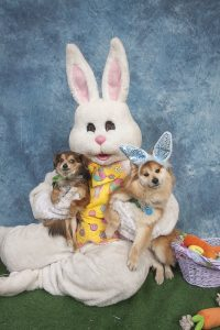 easter-bunny-dogs